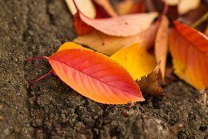 落ち葉の遊び方!保育士が教える秋冬の楽しみ方!