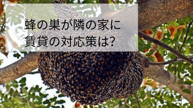 蜂の巣が隣の家に! 空き家やアパート賃貸の対応策は?
